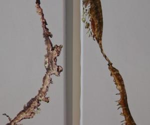 mdlx-cortex-detail-02