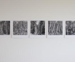 mdlx-redresser les arbres-01