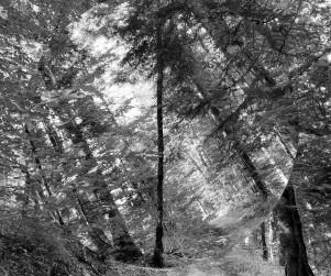 mdlx-redresser les arbres-02