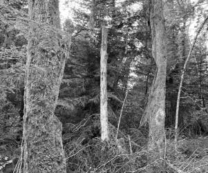 mdlx-redresser les arbres-03