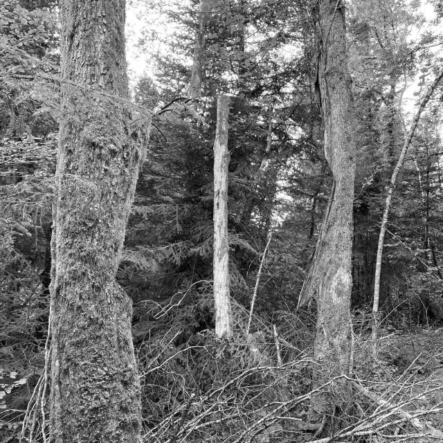 redresser les arbres