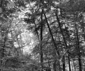mdlx-redresser les arbres-04